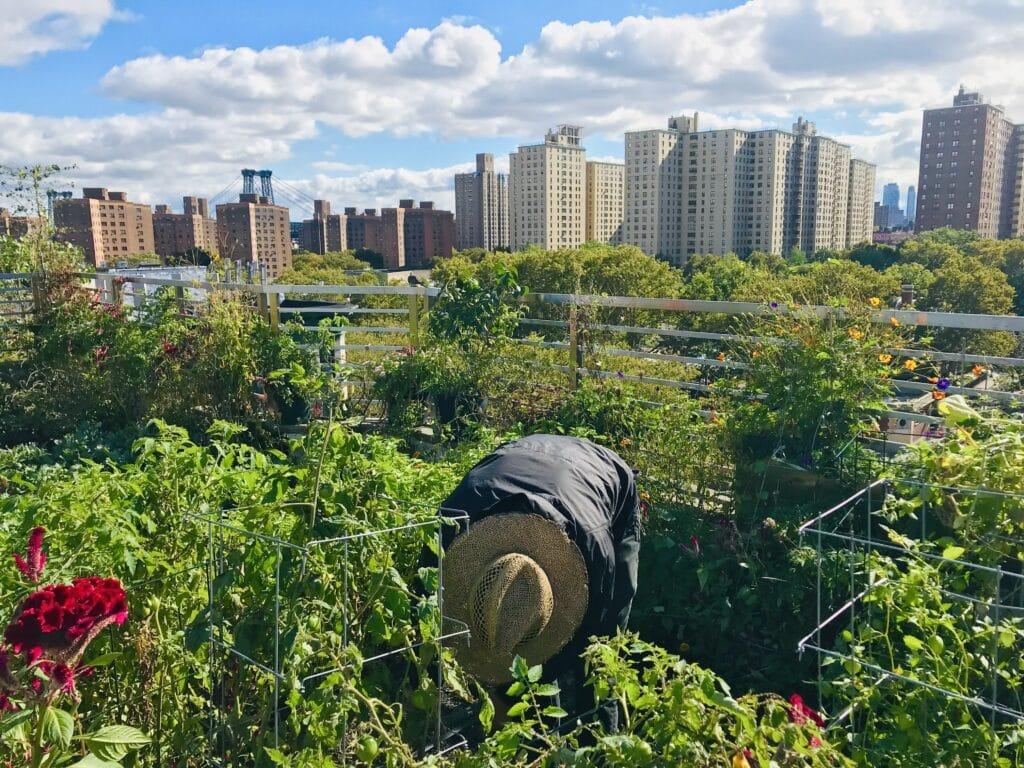 Sean O'Grady rooftop orchard
